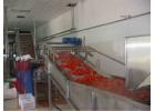 供应番茄加工生产线